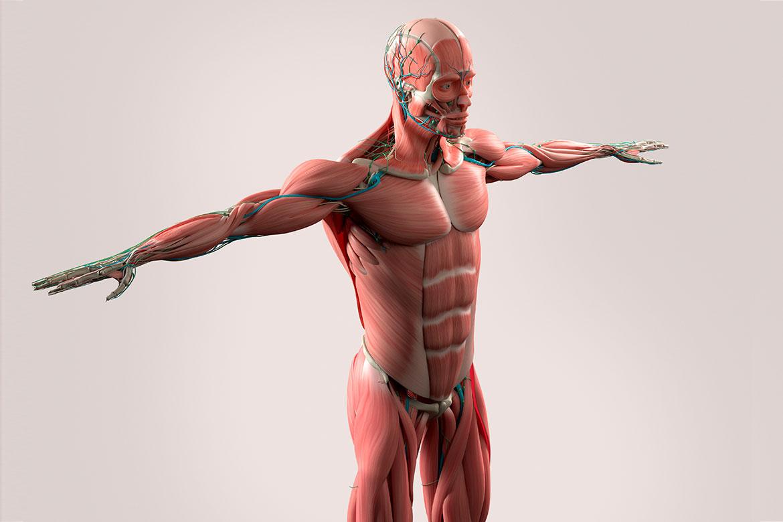 Cadenas musculares en el centro OREKA de Eibar